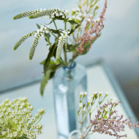 Sanderson_2018_EmbletonBay_Flower Detail_78